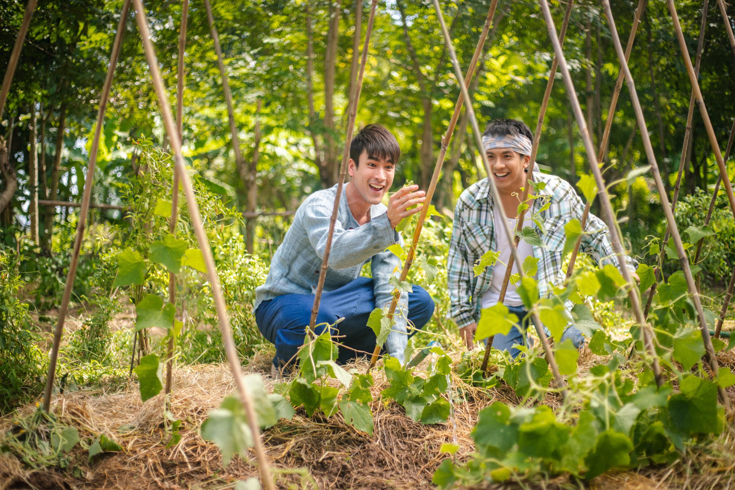 FINAL_มนต์รักหนองผักกะแยง-1306